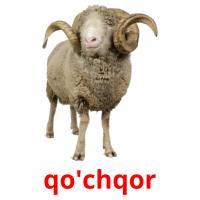 qo'chqor picture flashcards