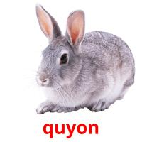 quyon picture flashcards
