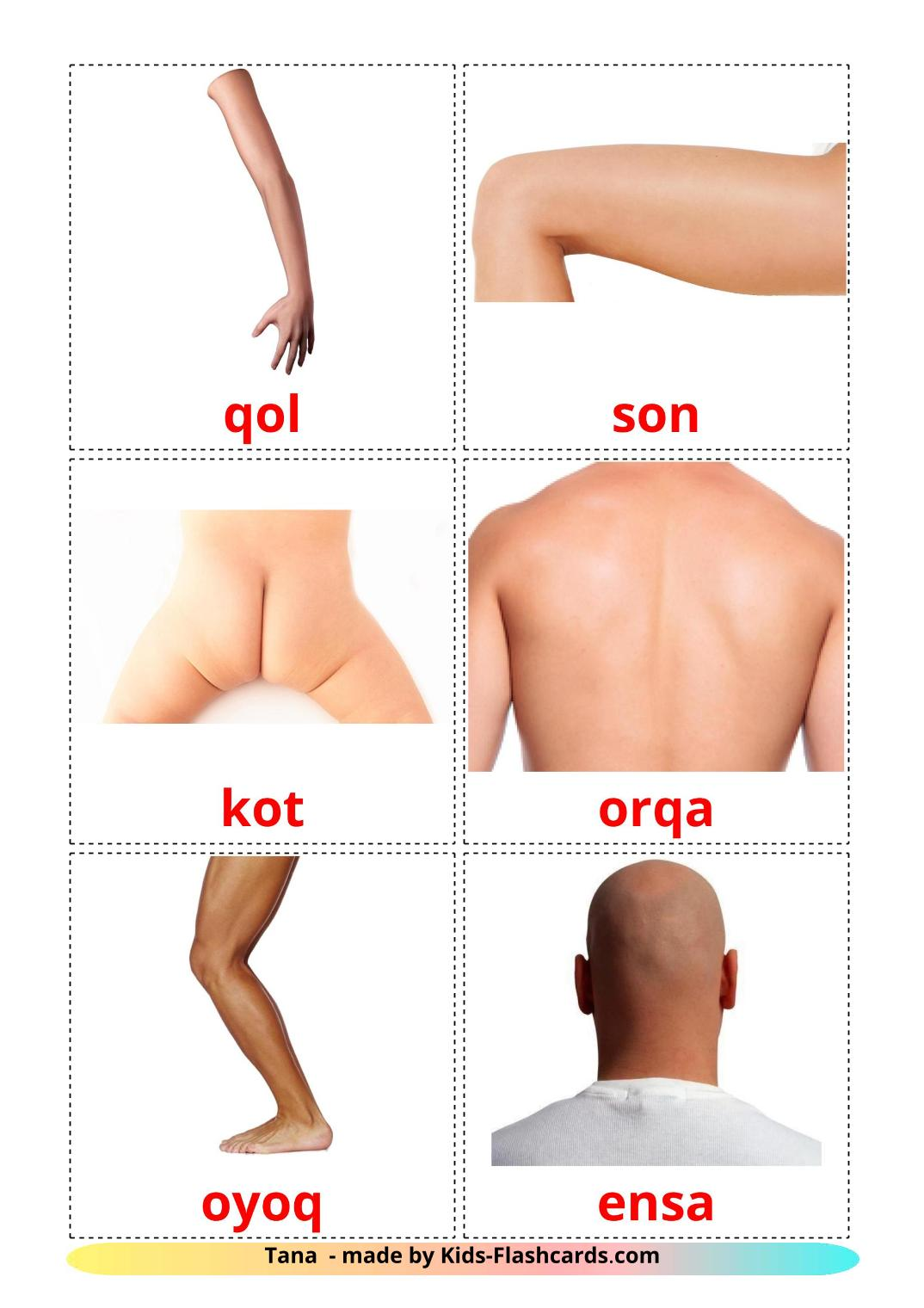 Body Parts - 26 Free Printable uzbek Flashcards