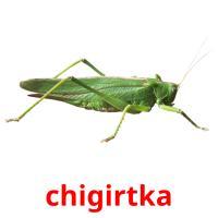 chigirtka picture flashcards