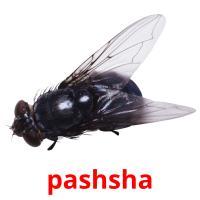 pashsha picture flashcards