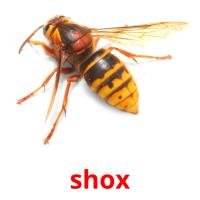 shox picture flashcards
