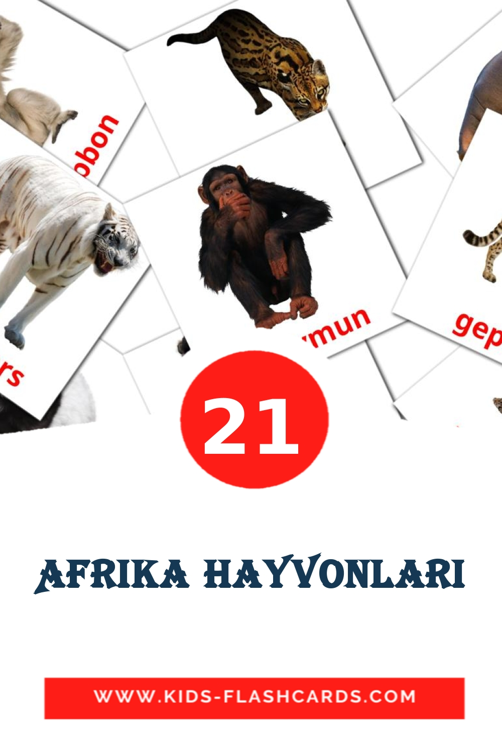 21 Afrika hayvonlari Picture Cards for Kindergarden in uzbek