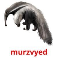 murzvyed picture flashcards