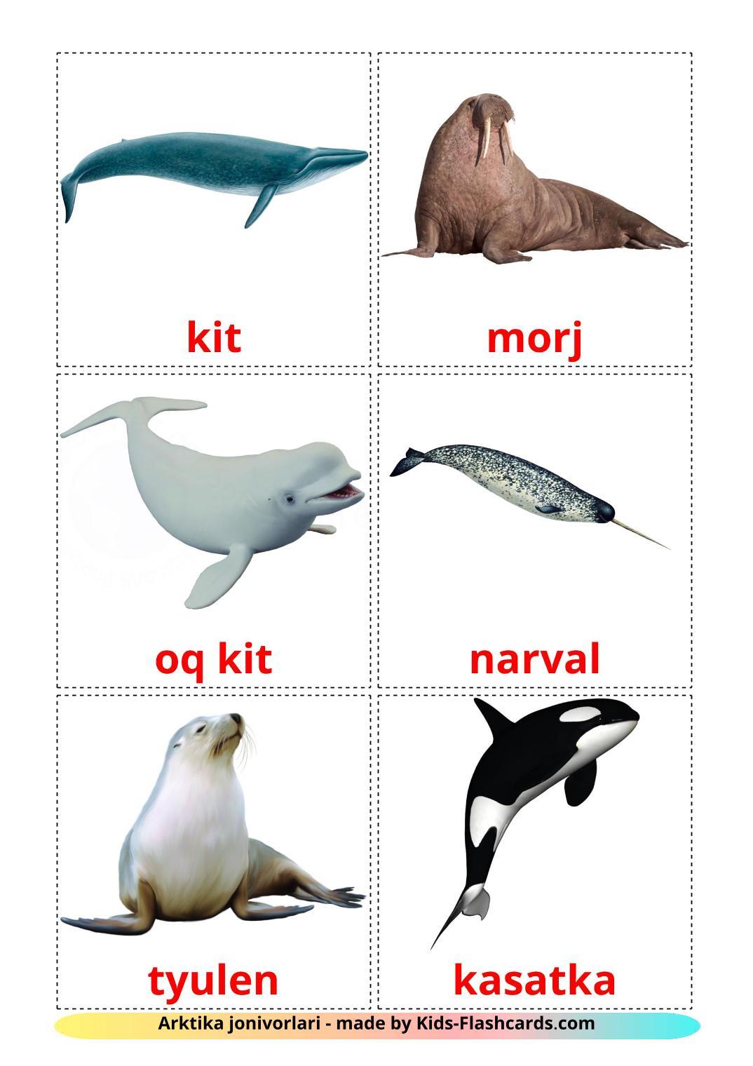 Arctic animals - 14 Free Printable uzbek Flashcards