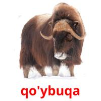 qo'ybuqa picture flashcards