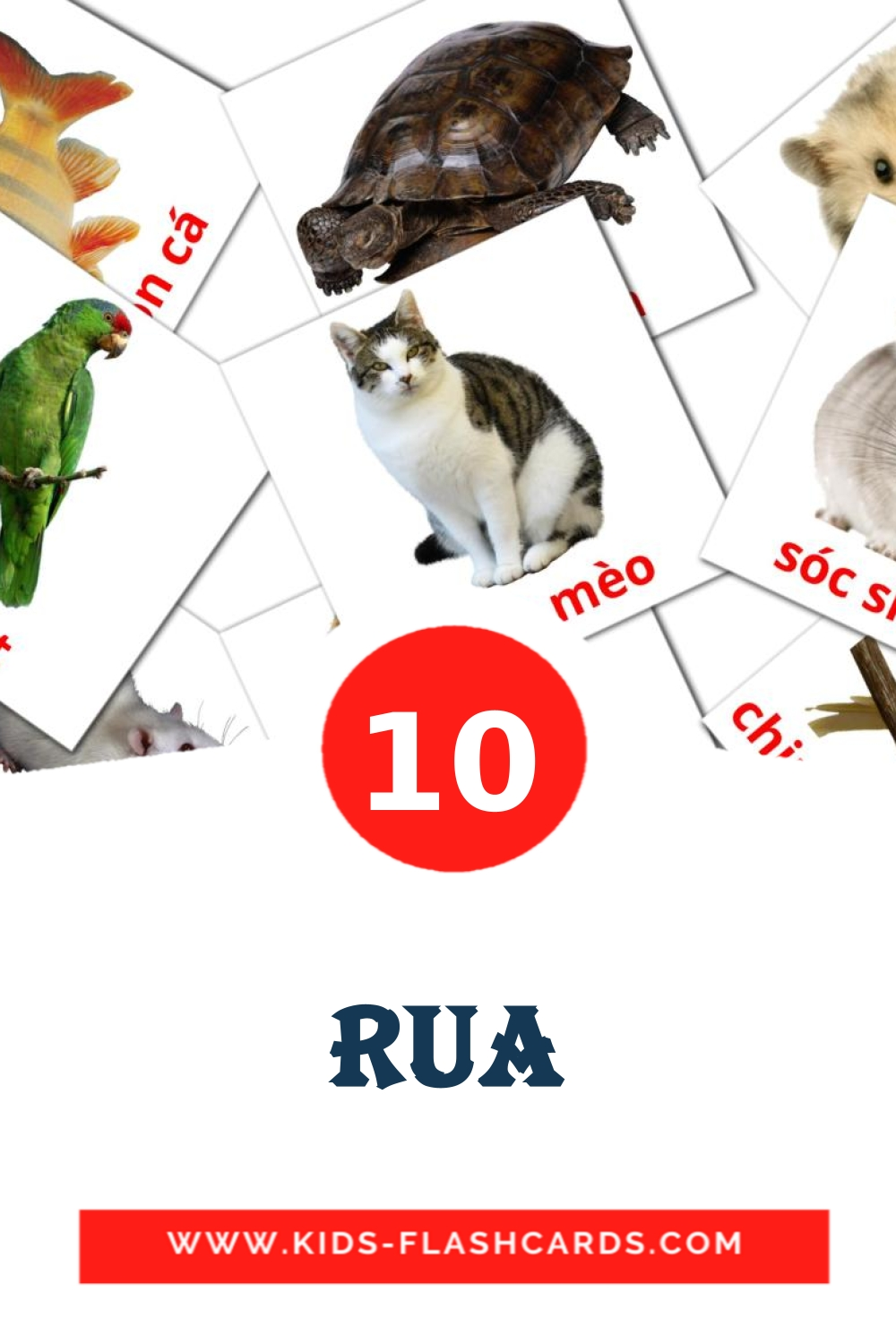 10 Rua Picture Cards for Kindergarden in vietnamese