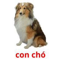 con chó picture flashcards