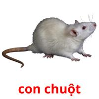 con chuột picture flashcards