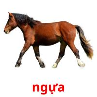 ngựa picture flashcards