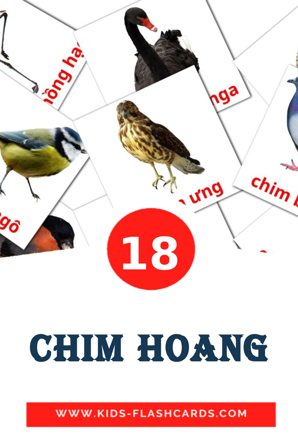 18 Chim hoang Picture Cards for Kindergarden in vietnamese