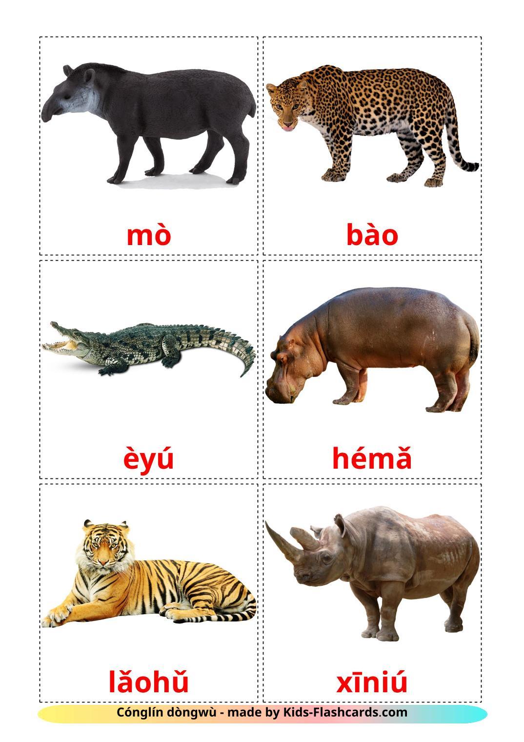 Jungle animals - 21 Free Printable pinyin Flashcards