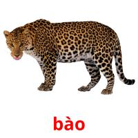 bào picture flashcards