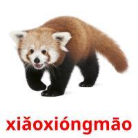 xiǎoxióngmāo picture flashcards