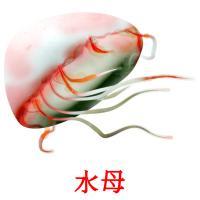 水母 picture flashcards