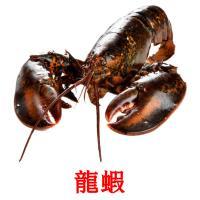 龍蝦 picture flashcards