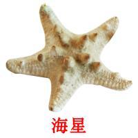 海星 picture flashcards