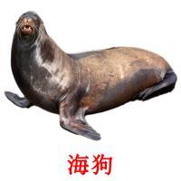 海狗 picture flashcards