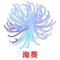 海葵 picture flashcards