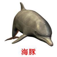 海豚 picture flashcards