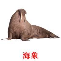 海象 picture flashcards