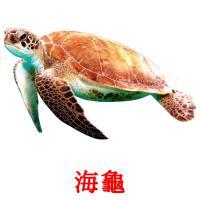 海龜 picture flashcards