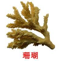珊瑚 picture flashcards
