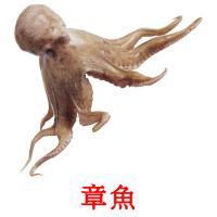 章魚 picture flashcards