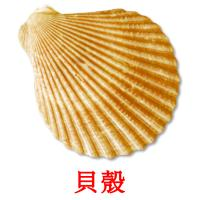 貝殼 picture flashcards