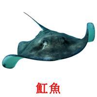 魟魚 picture flashcards