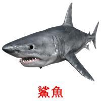 鯊魚 picture flashcards
