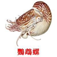 鸚鵡螺 picture flashcards