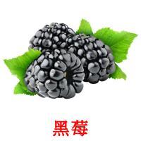 黑莓 карточки энциклопедических знаний