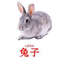 兔子 picture flashcards