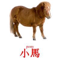 小馬 picture flashcards