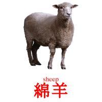 綿羊 picture flashcards