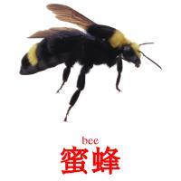 蜜蜂 picture flashcards