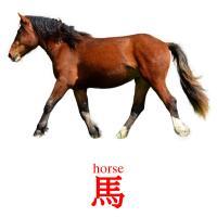 馬 picture flashcards