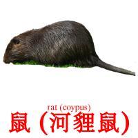 鼠 (河貍鼠) карточки энциклопедических знаний