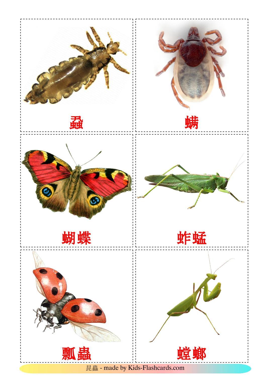 Насекомые - 23 Карточки Домана на китайский(Традиционный)