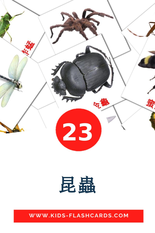 昆蟲 на китайский(Традиционный) для Детского Сада (23 карточки)
