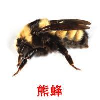 熊蜂 карточки энциклопедических знаний