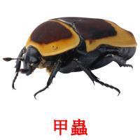 甲蟲 карточки энциклопедических знаний