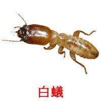 白蟻 карточки энциклопедических знаний