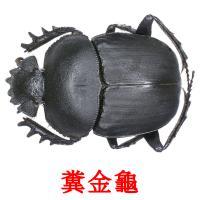 糞金龜 карточки энциклопедических знаний