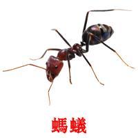 螞蟻 карточки энциклопедических знаний