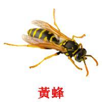 黃蜂 карточки энциклопедических знаний