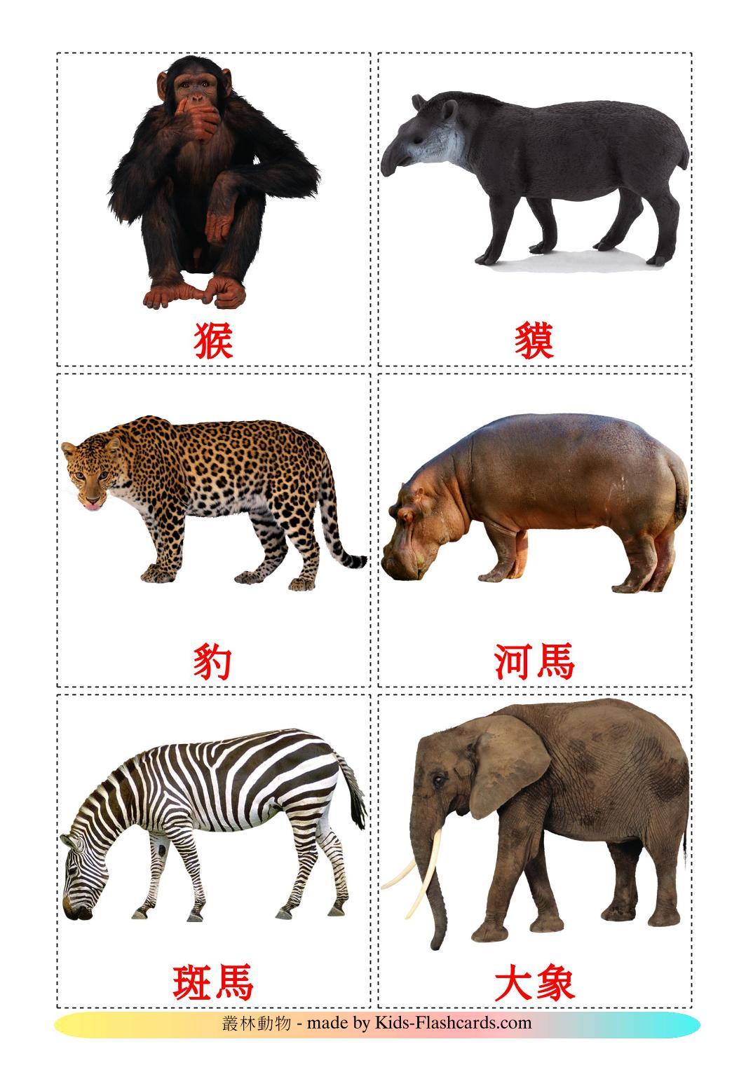 Животные африки - 21 Карточка Домана на китайский(Традиционный)