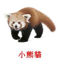 小熊貓 карточки энциклопедических знаний