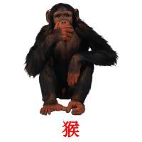 猴 карточки энциклопедических знаний